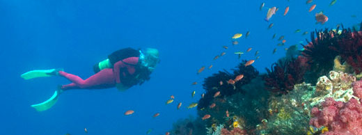 diving in red sea hurghada